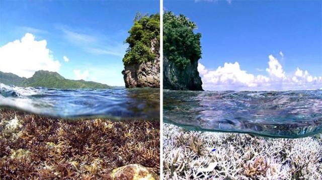 Фотографии от экологических организаций мира в стиле 10YearChallenge (14 фото)
