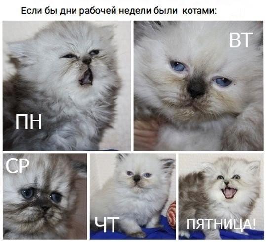 Подборка картинок с котами (35 фото)