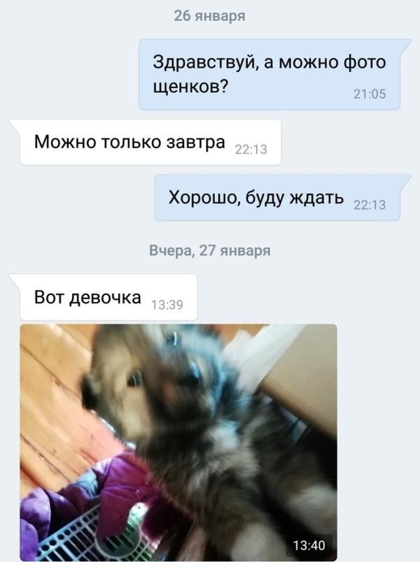 Как подрастающий бизнесмен продавал щенков (7 скриншотов)