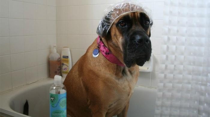 Полезные лайфхаки для владельцев собак (10 фото)