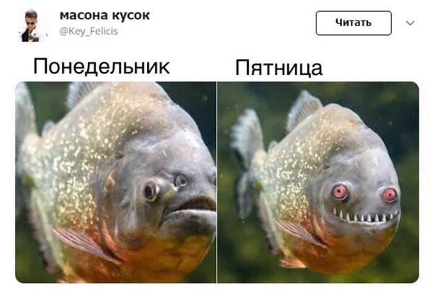 Прикольные картинки (42 фото) 04.02.2019