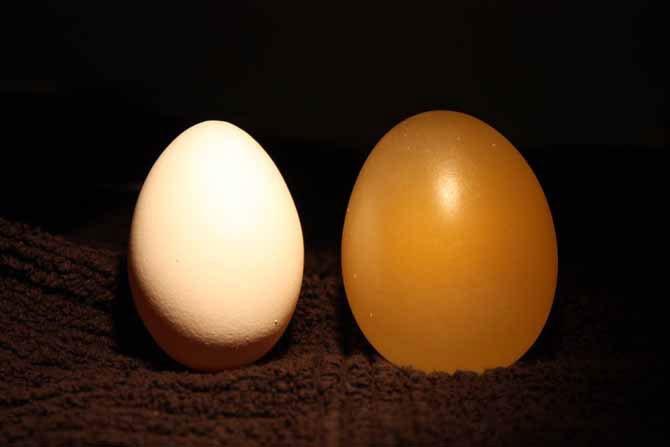Что будет с яйцом в уксусе (12 фото)