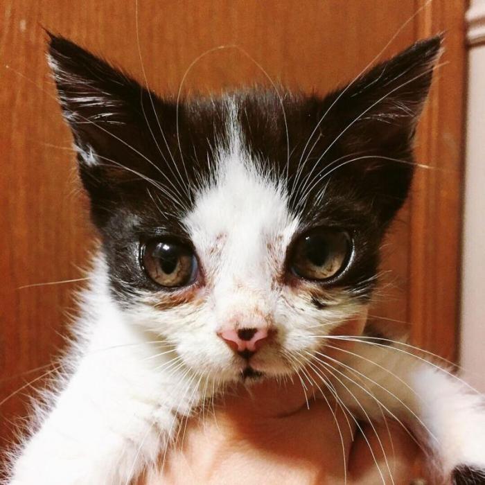 Из-за редкого недуга у кошки огромные глаза и куча нарядов (12 фото)