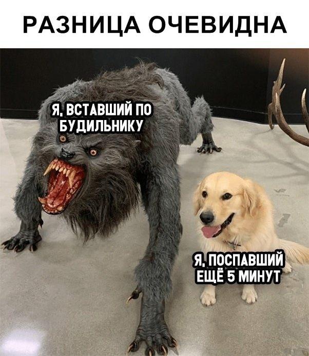 Прикольные картинки (40 фото) 07.02.2019