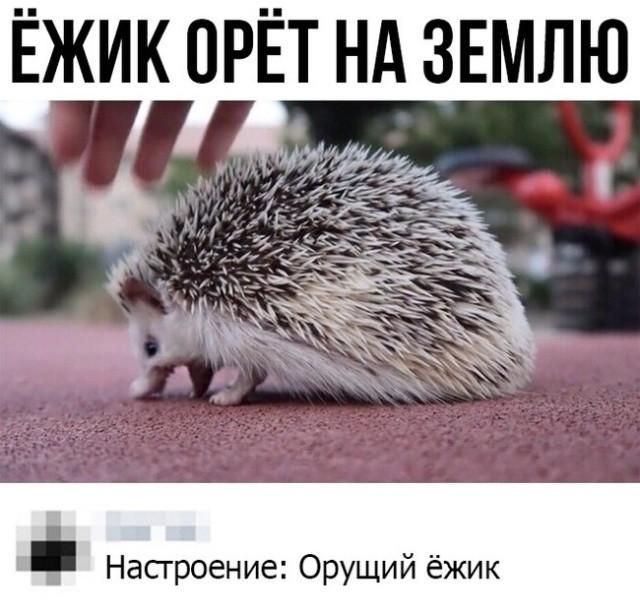 Прикольные картинки (43 фото) 08.02.2019