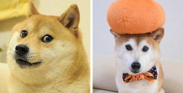 Как выглядят и чем занимаются в наши дни герои известных интернет-мемов (32 фото)