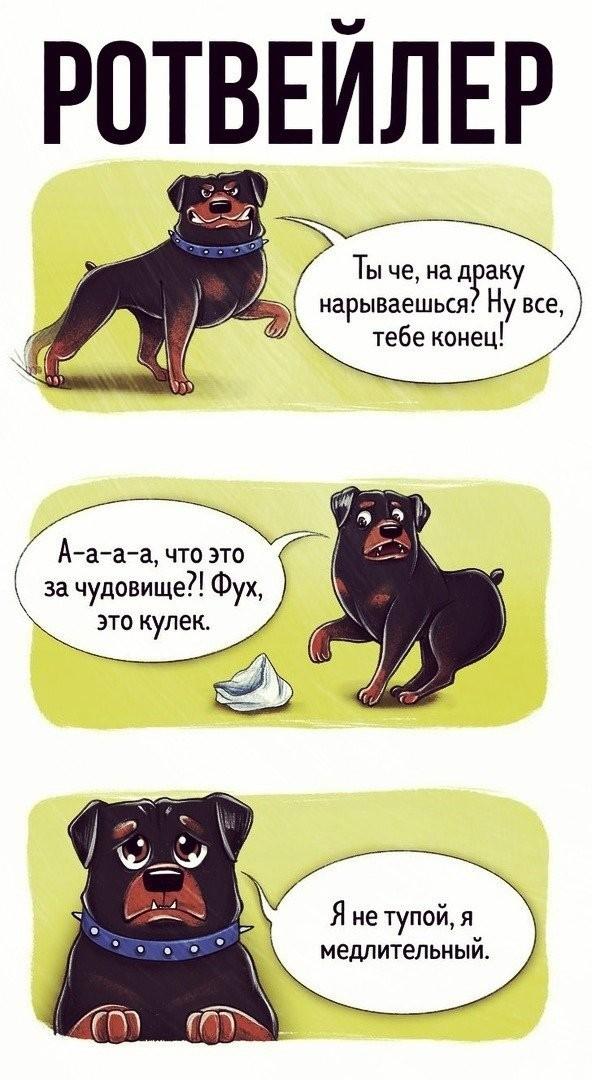 Что расскажут разные породы собак о себе (10 фото)
