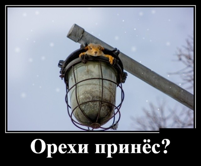 Демотиваторы (30 фото) 13.02.2019