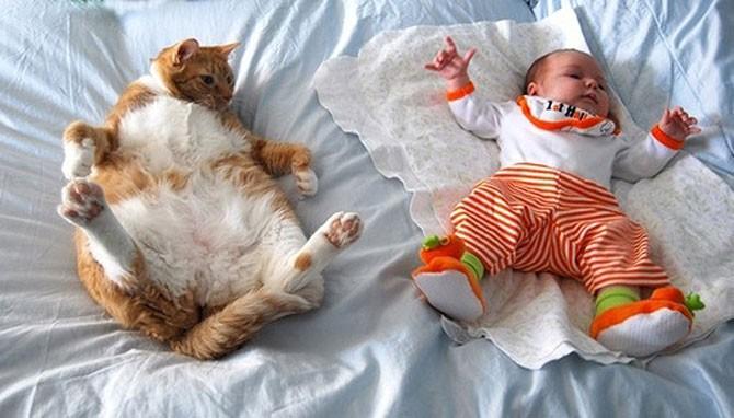 25 смешных кошачьих поз для сна (26 фото)