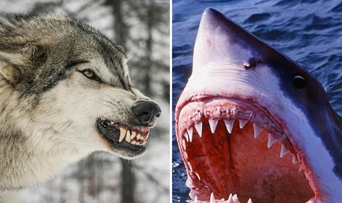 От какого животного погибает больше всего людей (6 фото)