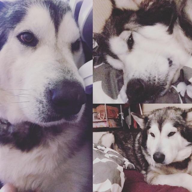 Больной пес изменился до неузнаваемости, когда обрел новый дом (5 фото)