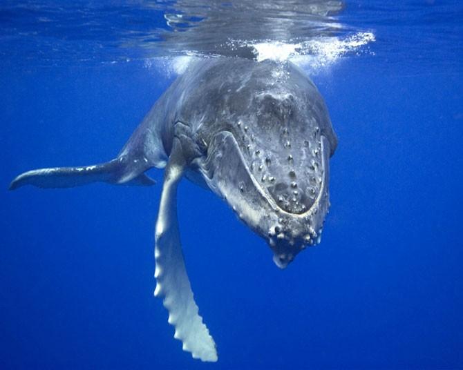 Самый одинокий кит в мире (5 фото)