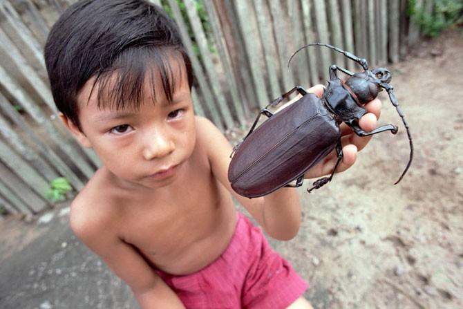 Самый большой в мире жук (14 фото)