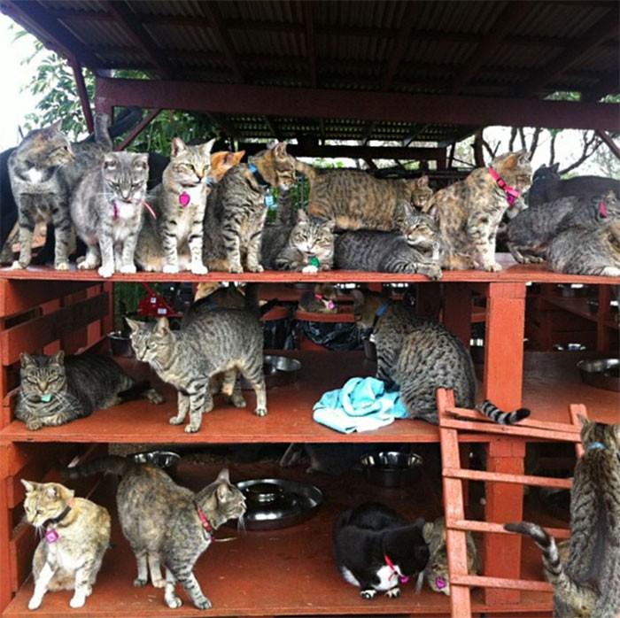 Заповедник, где можно погладить сразу до 500 котиков (12 фото)