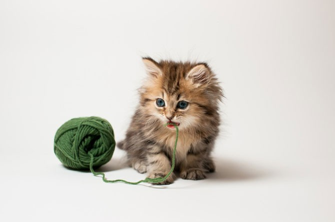 Самый милый котенок в мире (40 фото)