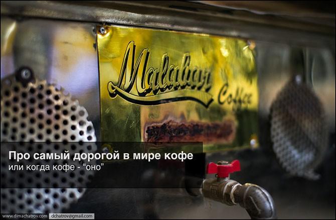 Про самый дорогой в мире кофе (14 фото)