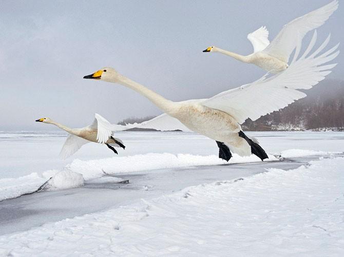 Яркие фотографии дикой природы от National Geographic (31 фото)