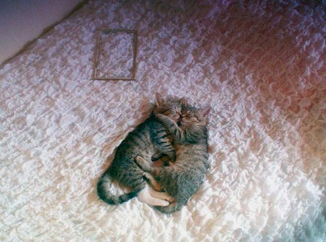 Кошачья любовь (25 фото)