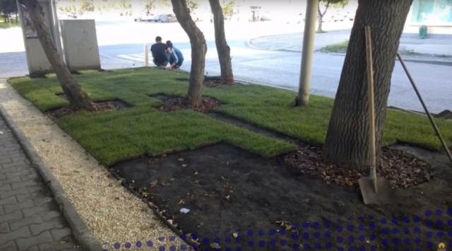 Коммунальщики перекопали экскаватором образцовый газон (5 фото)