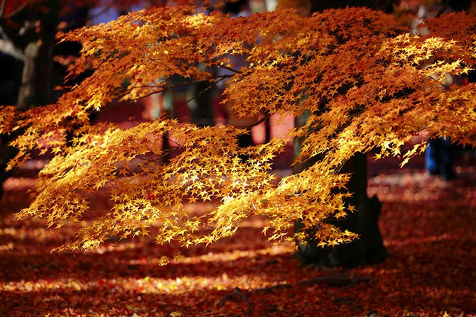 Осенний Киото (31 фото)