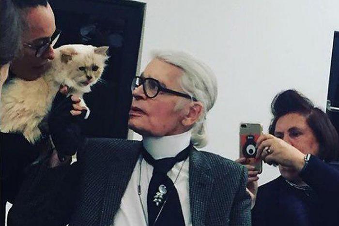 Любимая кошка Лагерфельда может получить 150 миллионов фунтов (2 фото)