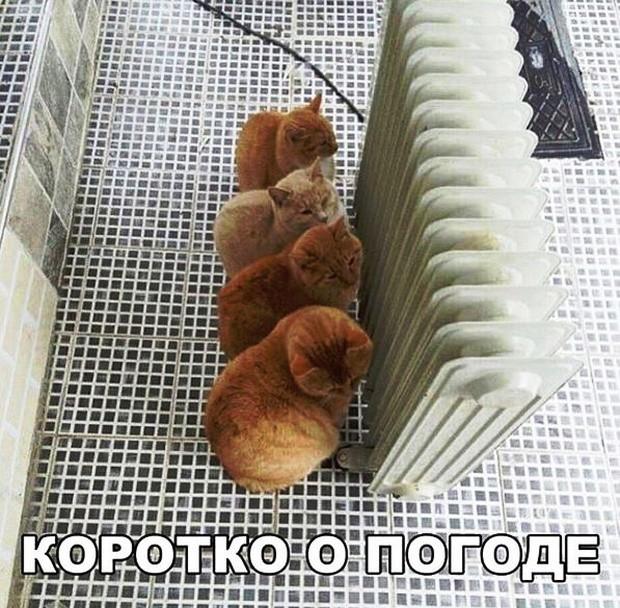 Простой юмор с просторов сети (33 фото)