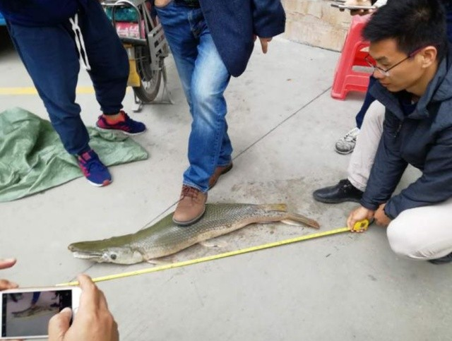 Необычные рыбы были замечены в озере в китайском парке (6 фото)