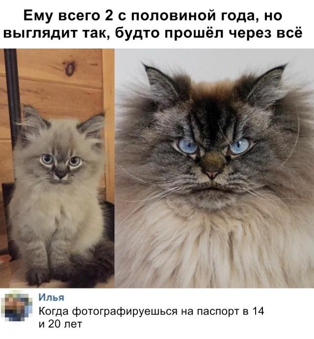 Прикольные картинки (46 фото) 27.02.2019