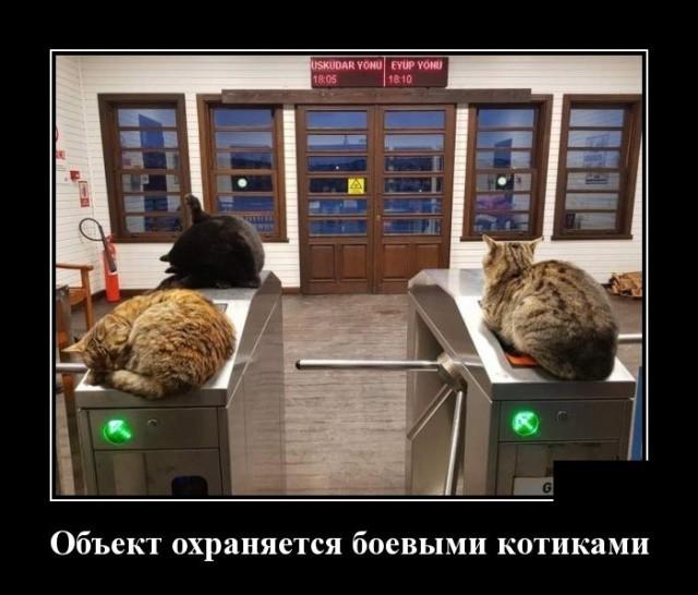 Демотиваторы (30 фото) 27.02.2019
