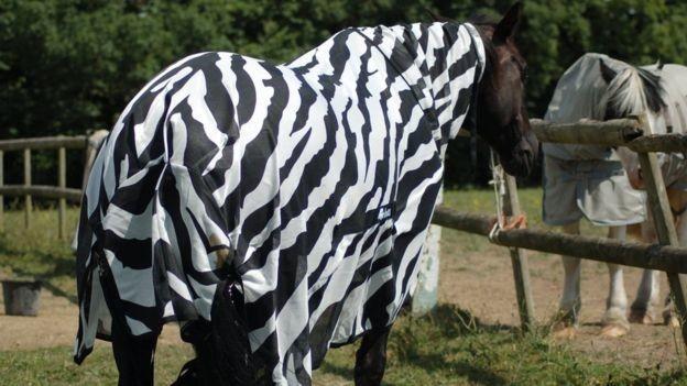 Ученые рассказали, зачем зебре нужны полоски (4 фото)