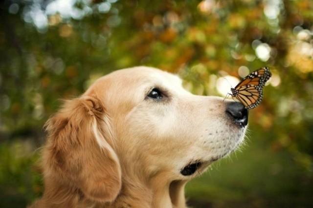 Красивые фотографии вместо тысячи слов (52 фото)