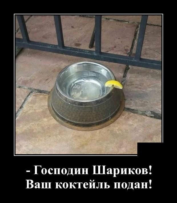 Демотиваторы (30 фото) 04.03.2019