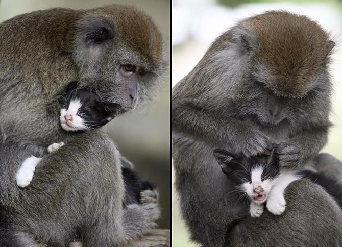 Забавные фотографии животных в повседневной жизни (27 фото)