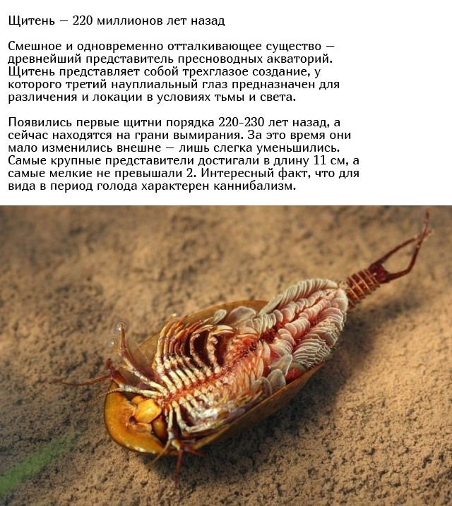Древние существа, которые живут на нашей планете многие миллионы лет (10 фото)