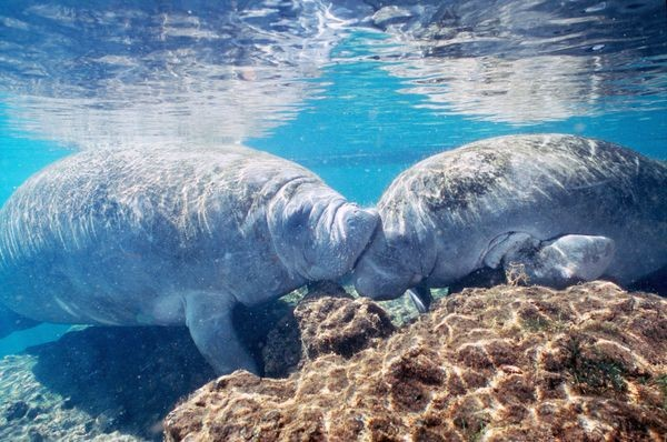 Любовь в мире животных (19 фото)