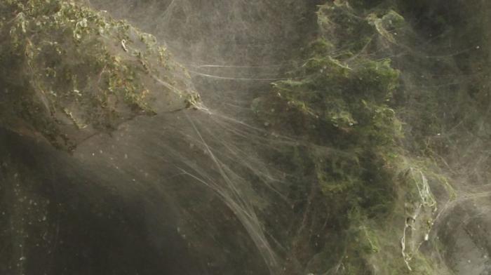 Пауки спасаются от воды (9 фото)