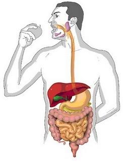Важное о пищеварении (2 фото)