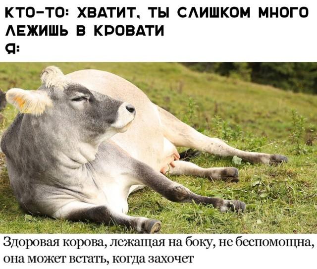 Прикольные картинки (48 фото) 20.03.2019