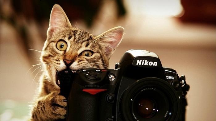 Милые и смешные животные в фотографиях (14 фото)