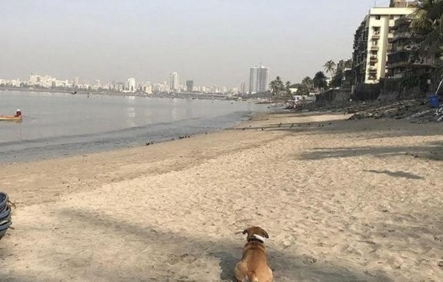До и после очистки пляжа Махим Бич в Мумбае (2 фото)