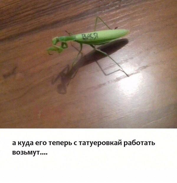 Нестандартный юмор (29 фото)
