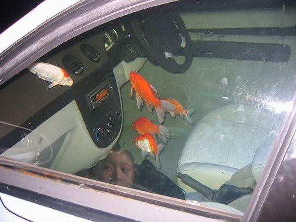 Аквариум внутри автомобиля (9 фото)