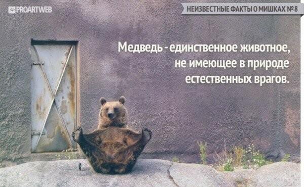 Неизвестные факты о мишках (10 фото)