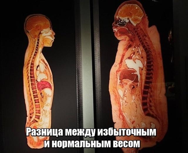 Подборка прикольных фото (40 фото) 15.04.2019