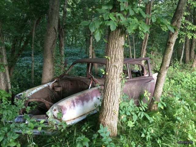 Странные вещи, которые люди нашли, гуляя по лесу (17 фото)