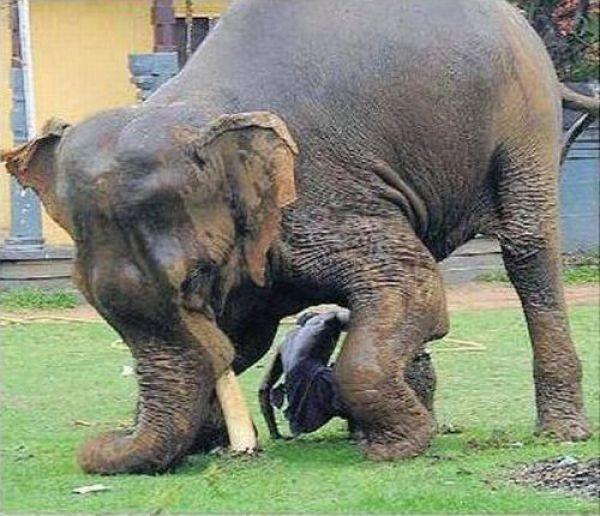 Невероятное спасение от слона (6 фото)