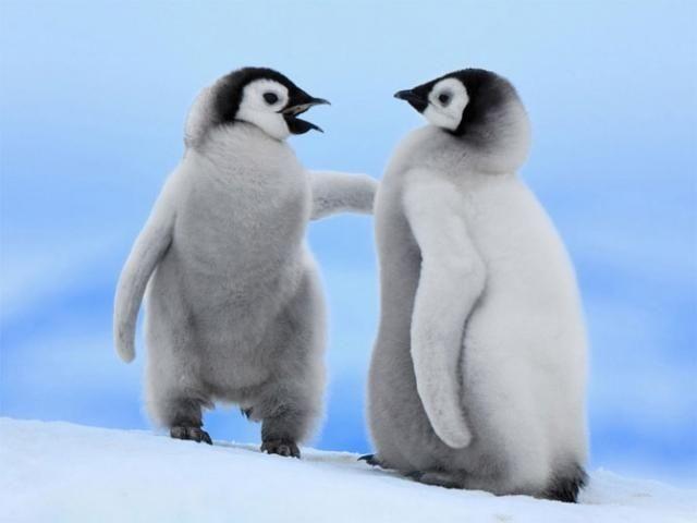 Эти забавные животные (20 фото)