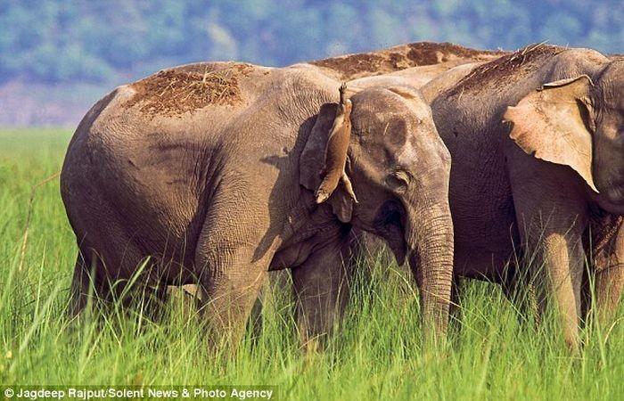 Слон и ящерица (3 фото)