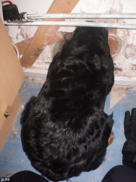 Пес застрял в дырке в стене (3 фото)