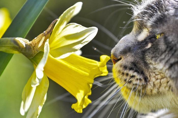 Весна в фотографиях (22 фото)